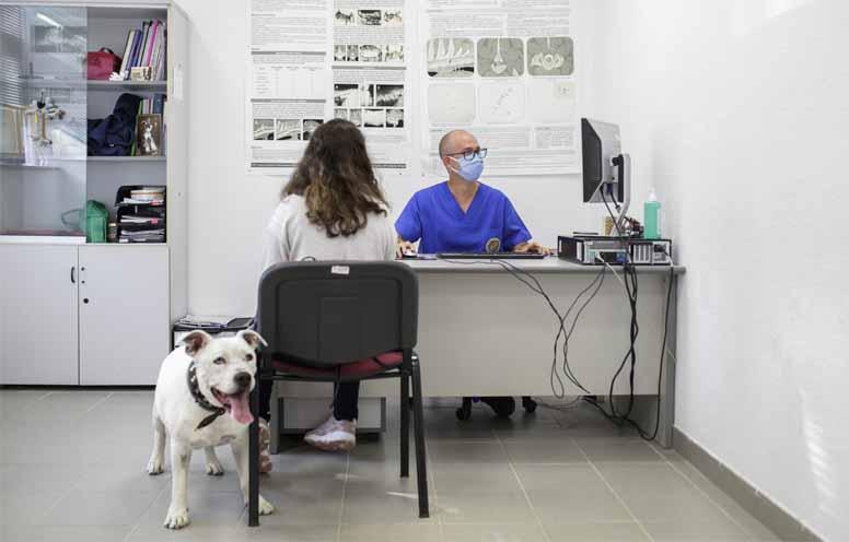castrar o esterilizar - blog veterinaria uax